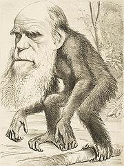 180px-Darwin_ape
